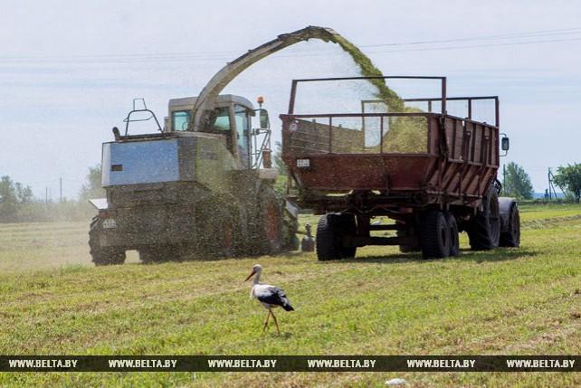 Более 1,6 тыс. га кормовых трав скошено в Жабинковском районе