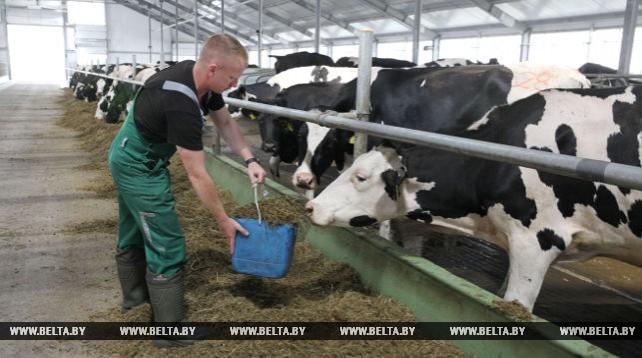 Новая молочно-товарная ферма введена в эксплуатацию в Городокском районе