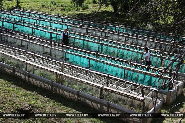 Фермерское хозяйство из Кореличского района планирует поставить на экспорт около 3 т улиток
