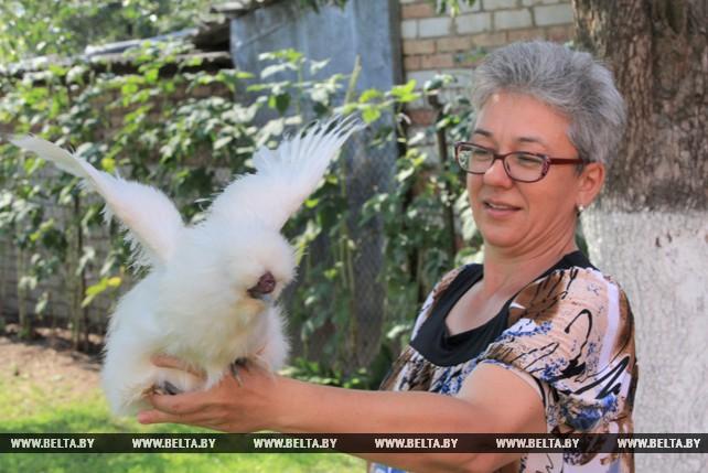 Могилевчанка Светлана Бульбицкая разводит карликовые породы кур