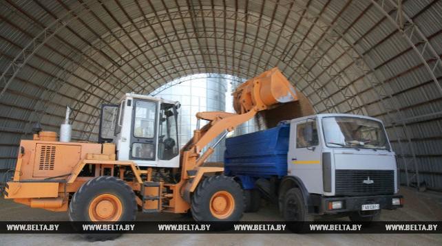 Прием зерна нового урожая идет на Витебском комбинате хлебопродуктов
