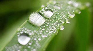 Время природы: сохранение биоразнообразия и эффективное природопользование