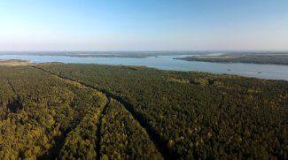 Рациональное лесопользование. Работа государственной лесной охраны в летний период