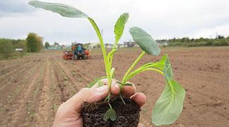 Научное обеспечение растениеводческой отрасли агропромышленного комплекса Беларуси