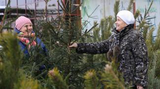 Организация и ассортимент елочных базаров. Борьба с незаконными вырубками хвойных деревьев