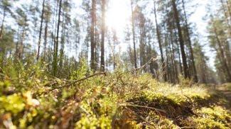 Развитие экотуристического потенциала особо охраняемых природных территорий