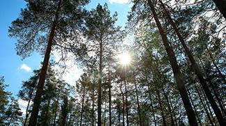 Приоритетные направления работы государственной лесной охраны в летний период