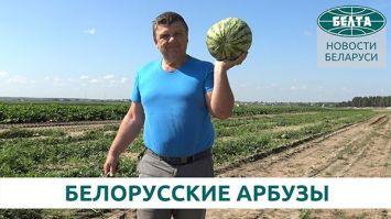 Как выращивают арбузы в Беларуси