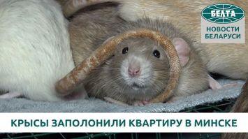 Крысы заполонили квартиру в Минске