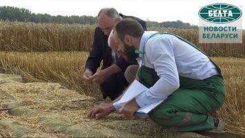 Минсельхозпрод начал мониторинг сохранности урожая