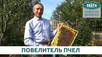 40 лет в окружении пчел