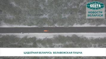 Цудоўная Беларусь. Белавежская пушча
