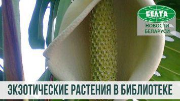 Экзотические растения Национальной библиотеки Беларуси