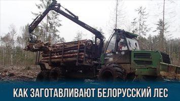 Как заготавливают белорусский лес