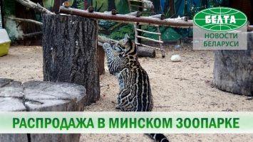 Кого можно купить в минском зоопарке