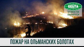 В Столинском районе третьи сутки тушат пожар на Ольманских болотах