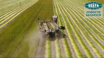Урожай-2021. Как убирают лен в Беларуси