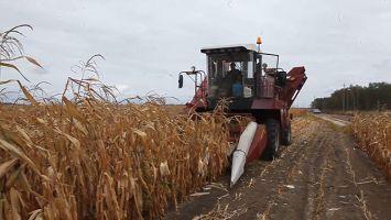 Уборка кукурузы комбайном