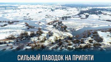 Сильный паводок на Припяти