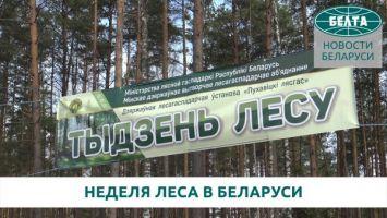 В Беларуси стартовала Неделя леса