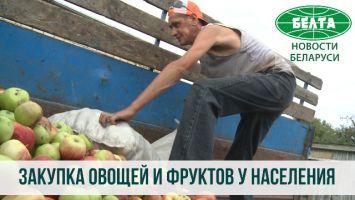Где в Солигорском районе можно сдать овощи и фрукты