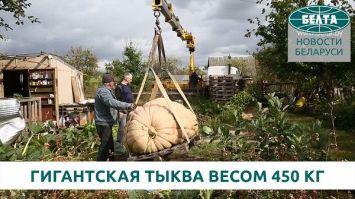 Гродненец вырастил гигантскую тыкву весом 450 килограмм