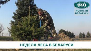 """Более 18 млн деревьев планируется высадить в Беларуси во время """"Недели леса"""""""