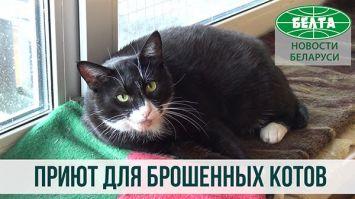 Приют для брошенных котов