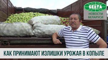 Как принимают излишки урожая в Копыле