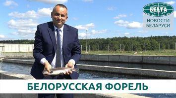 Как выращивают форель в Столбцовском районе