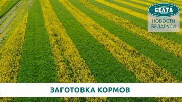 Заготовка кормов в Гродненском районе