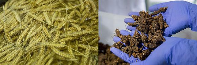 Только натуральное и самое лучшее сырье используется в производстве, что позволяет выпускать продукты самого высокого качества.