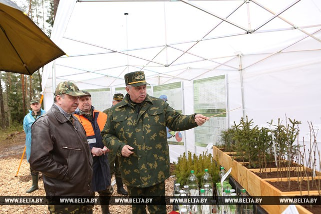 Нейтрализация последствий урагана влесах Республики Беларусь почти завершена— Кобяков