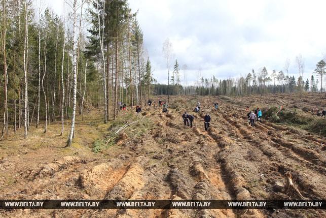 В Республики Беларусь прошла акция «Неделя леса»