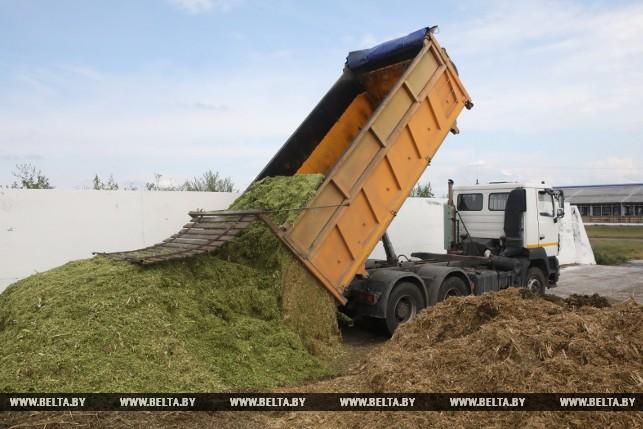 Заполнение силосной ямы кукурузным силосом