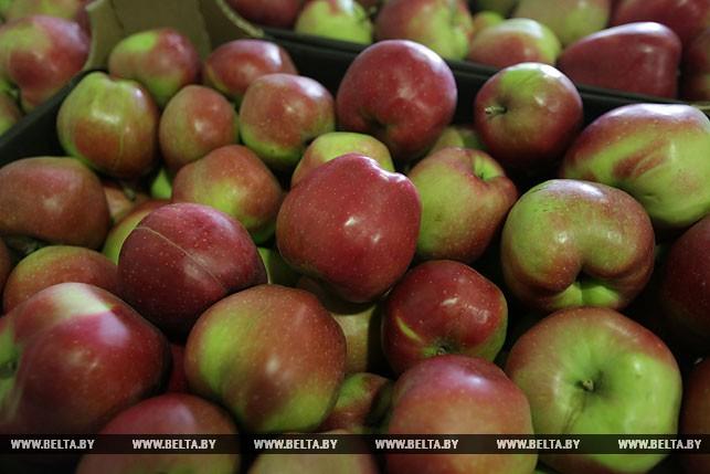 Курсовая по хранению яблок cкачать dominoplatje Читать курсовую работу online теме способы холодильного овощей фруктов ягод продолжительность груши