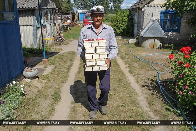 Выращивание малины вдохнуло новую жизнь в деревни Дрогичинского района