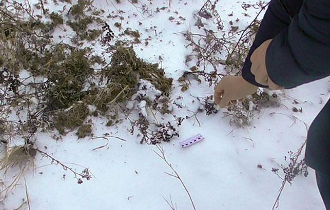 ВКормянском районе инспекторы природоохраны задержали среди поля мужчину сконоплей