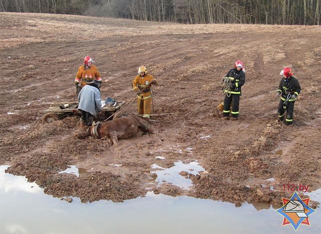 Cотрудники экстренных служб освободили лошадь из«грязевого плена»— МЧС