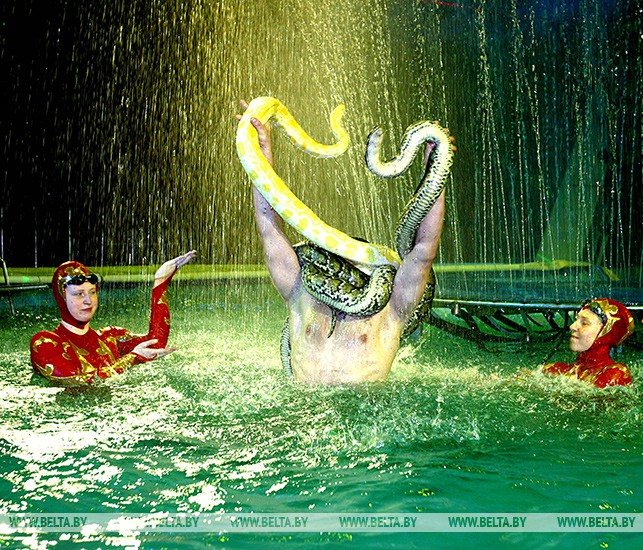 """Программа """"Цирк на воде"""" в Белгосцирке. 2006 год"""