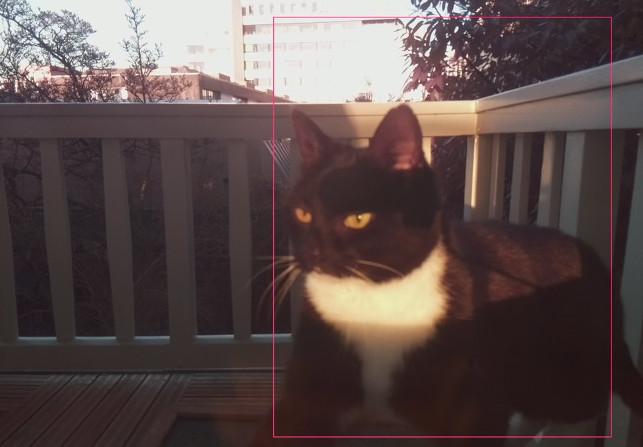 Инженер разработал систему распознавания морды конкретного кота