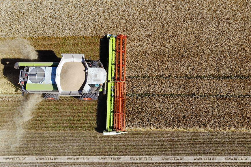 Во время уборки зерновых