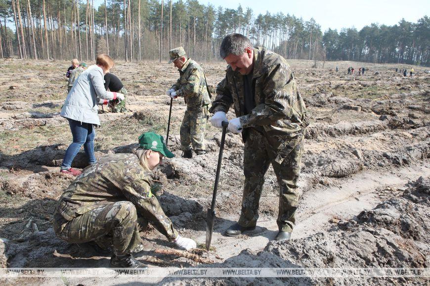 Геннадий Соловей во время посадки леса
