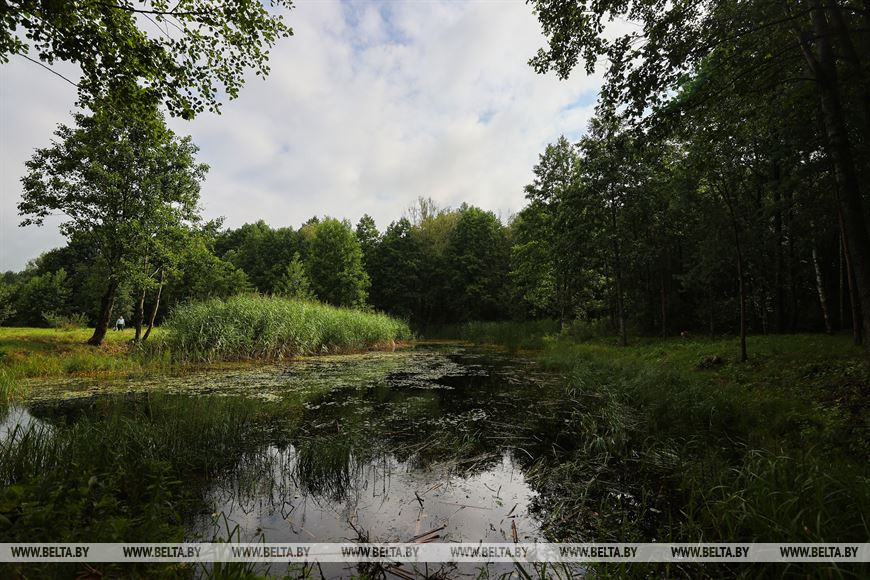 Царь-дуб, «кожушок» и хлебосольная деревня - едем душевно отдыхать в Малоритский район